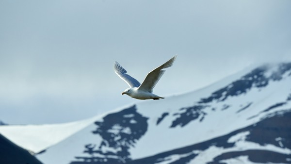 Witnessing wildlife in the Arctic and Antarctica with Dr. Damon Stanwell-Smith and James Lowen