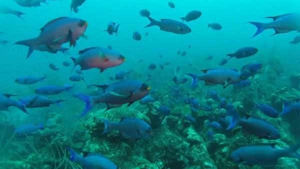 Explore Bermuda's marine life with BIOS CEO, Dr. William Curry