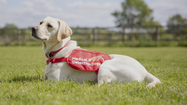 Medical Detection Dogs CEO and cofounder Dr. Claire Guest