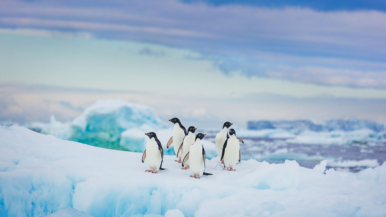 At home with the United Kingdom's Antarctic Heritage Trust